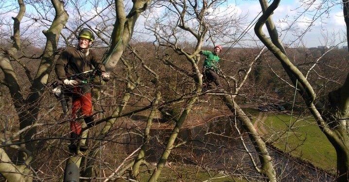 boomverzorging baarn, boom snoeien, bomen vellen, boomveiligheidscontrole, amersfoort, baarn, hilversum, almere, utrecht