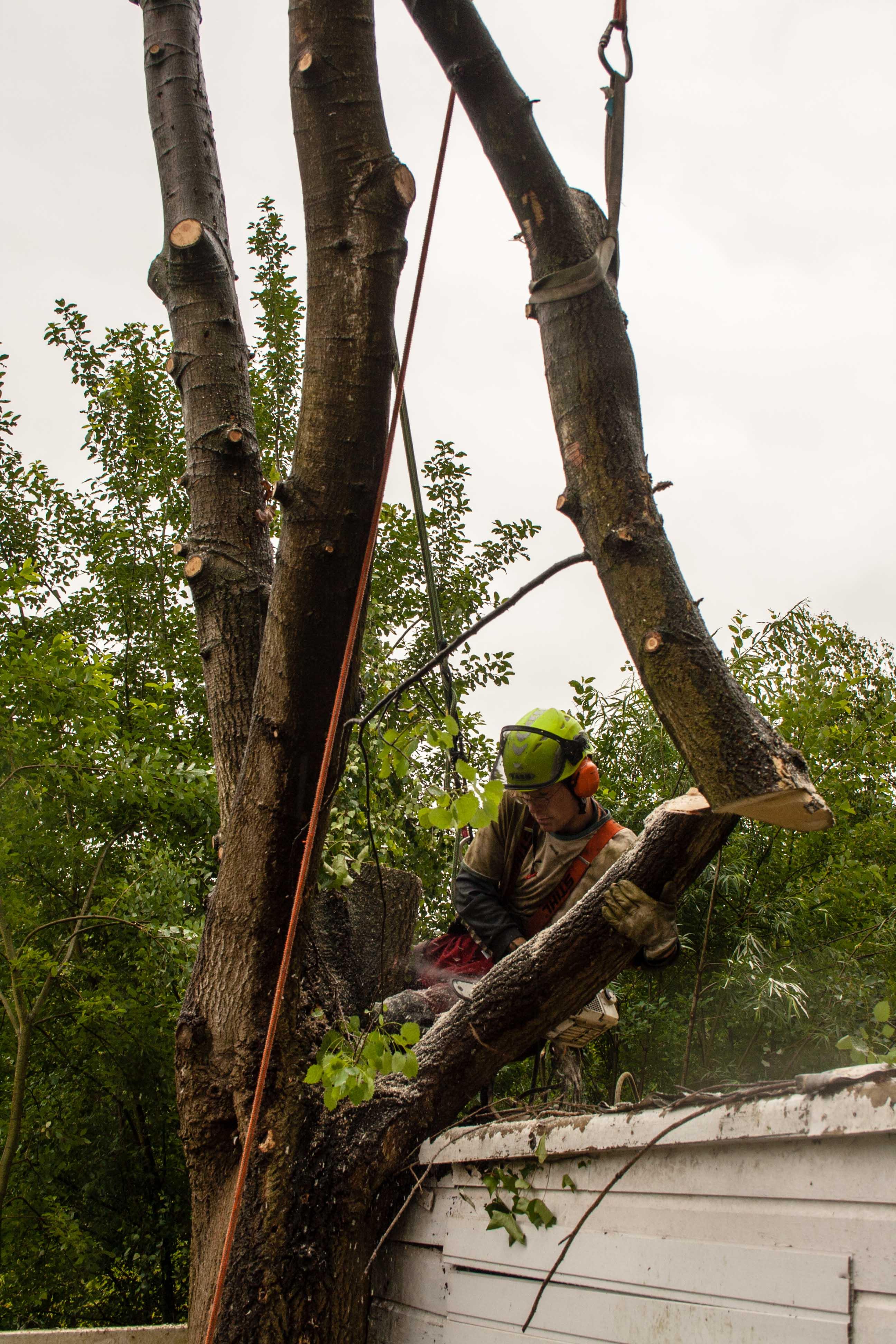 bomen snoeien, bomen kappen, boomverzorging, boomveiligheidscontrole, baarn, soest, hilversum, huizen, almere, amersfoort, bilthoven, de bilt, zeist
