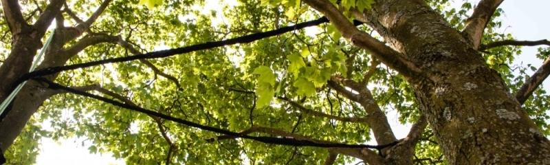 Met een stormanker is deze drie stemmige boom weer veilig